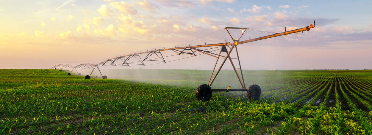 irrigation-on-corn-field